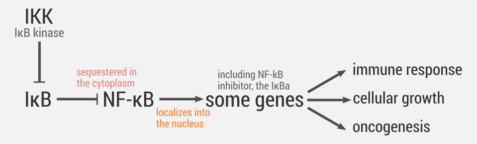 NF-kB activation pathway